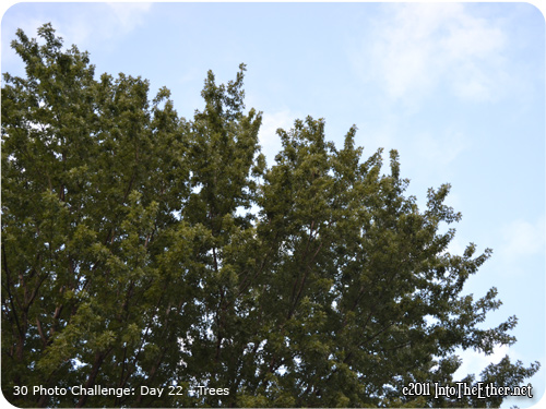 30 Day Photo Challenge: Day 22-Trees