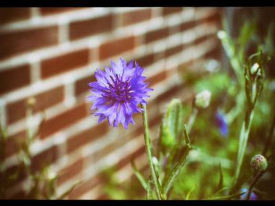 2017-07-01_Wildflowers-(1)_EDIT