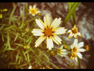 2017-07-01_Wildflowers-9_EDIT
