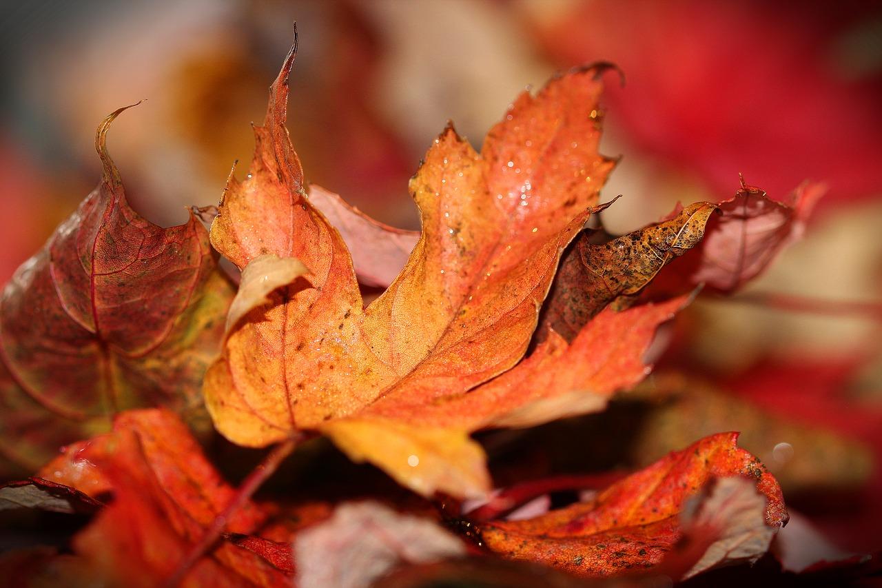 autumn-leaves-1693663_1280